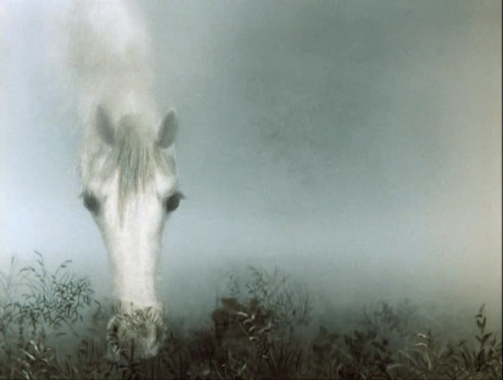 Мульт фильм ёжик в тумане фото 115-434
